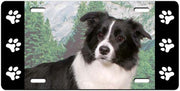 Border Collie License Plate