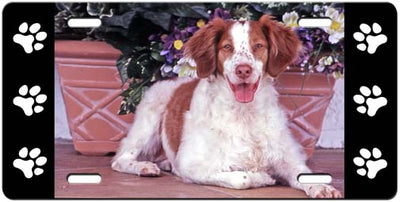 Brittany Spaniel License Plate