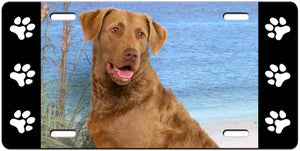 Chesapeake Bay Retriever License Plate
