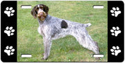 German Wirehair Pointer License Plate