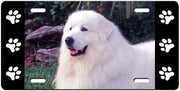 Great Pyrenees License Plate