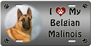 I Love My Belgian Malinois License Plate