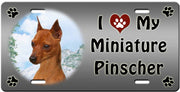 I Love My Miniature Pinscher License Plate