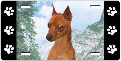 Miniature Pinscher License Plate