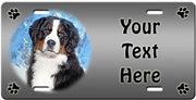 Personalized Bernese Mountain Dog License Plate