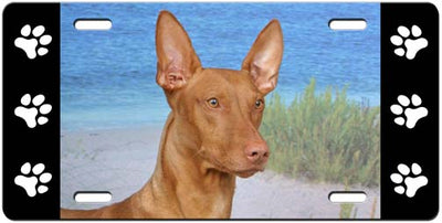 Pharaoh Hound License Plate