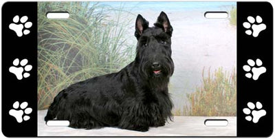 Scottish Terrier License Plate