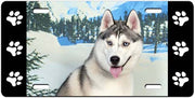 Siberian Husky License Plate