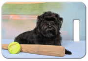 Affenpinscher Luggage Tag