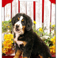 Bernese Mountain Dog Luggage Tag