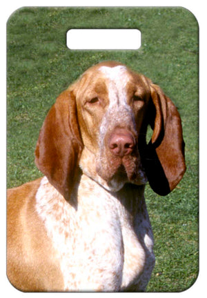 Bracco Italiano Luggage Tag