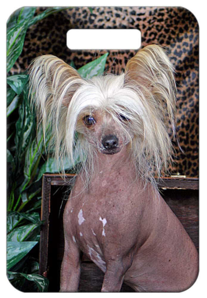 Chinese Crested - Hairless Luggage Tag