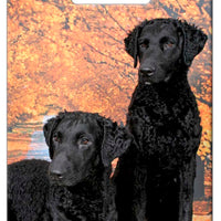 Curly Coated Retriever Luggage Tag