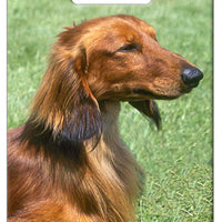Dachshund - Longhaired Luggage Tag