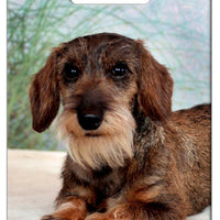 Dachshund - Wirehaired Luggage Tag