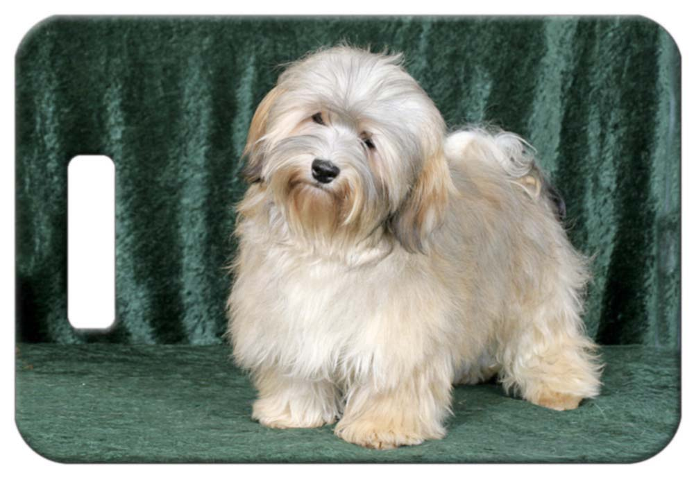 Havanese Luggage Tag