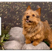 Norwich Terrier Luggage Tag