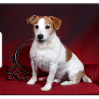 Parson Jack Russell Luggage Tag