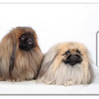 Pekingese Luggage Tag