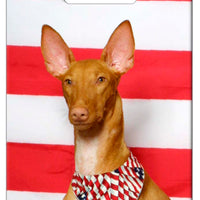 Pharaoh Hound Luggage Tag