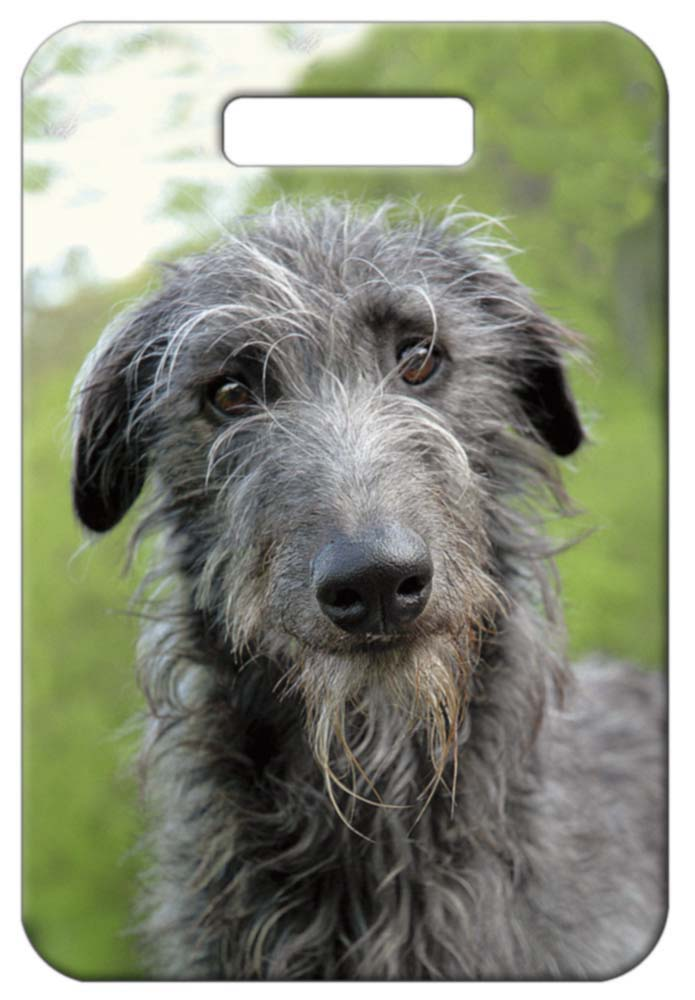 Scottish Deerhound Luggage Tag
