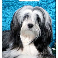 Tibetan Terrier Luggage Tag
