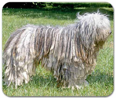 Bergamasco Mousepad