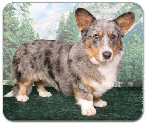 Cardigan Welsh Corgi Mousepad