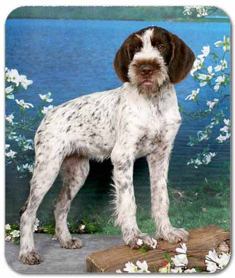 German Wirehair Pointer Mousepad