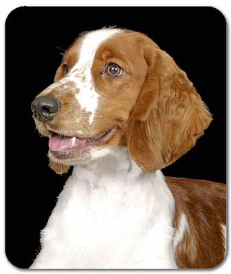 Welsh Springer Spaniel Mousepad