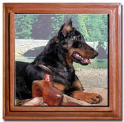 Beauceron Tile Trivet