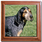 Blue Tick Coonhound Tile Trivet