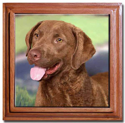 Chesapeake Bay Retriever Tile Trivet