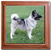Norwegian Elkhound Tile Trivet