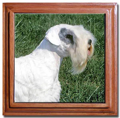 Sealyham Terrier Tile Trivet