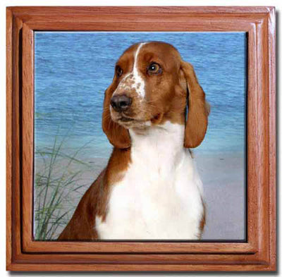 Welsh Springer Spaniel Tile Trivet