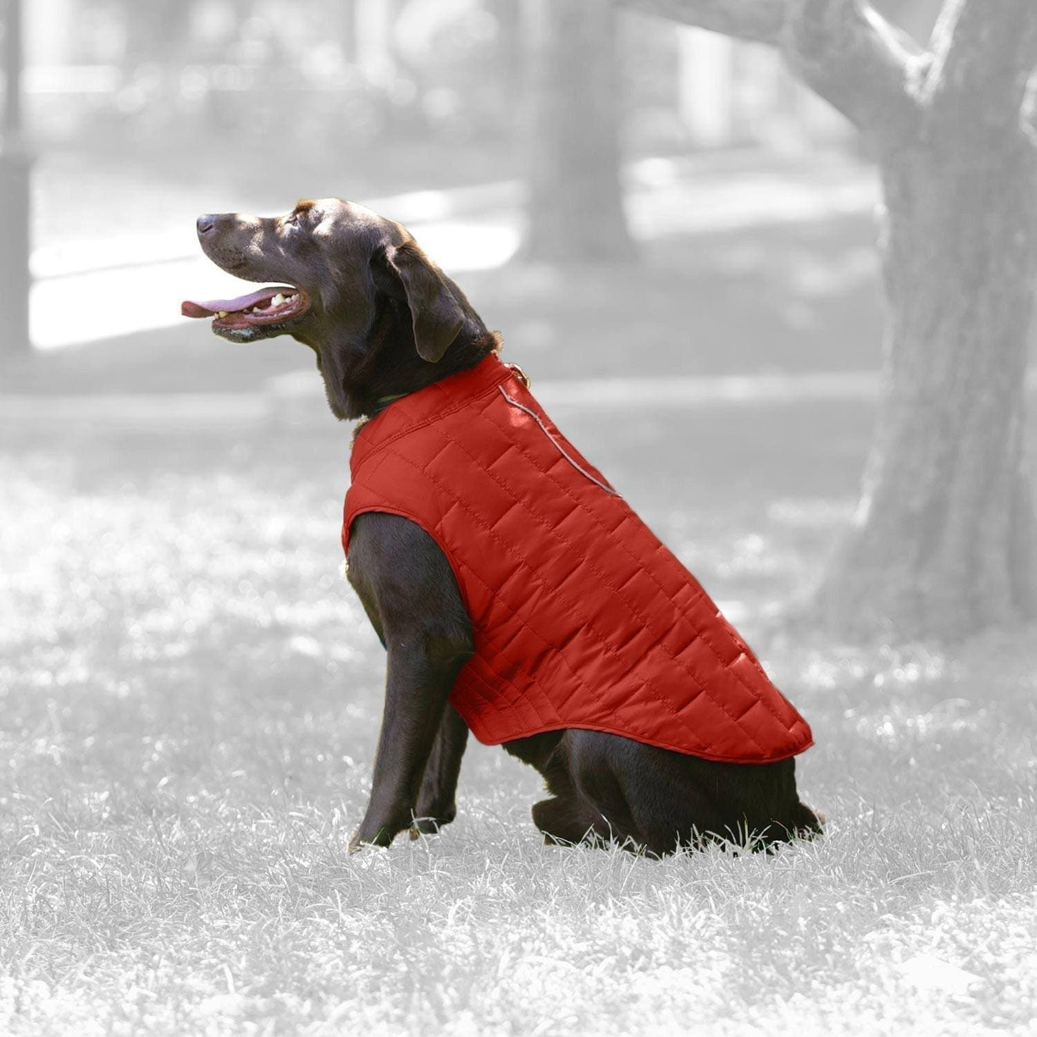 Chamarra  Reversible Impermeable para Perro Magenta / Rosa Chicle