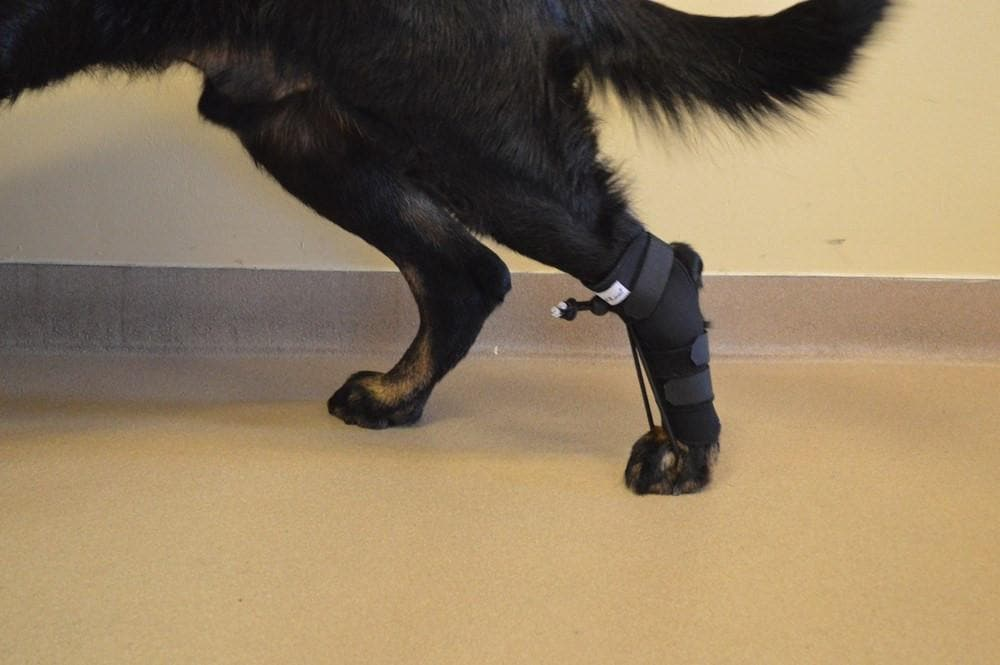 No-Knuckling Training Sock de Handicapped Pets