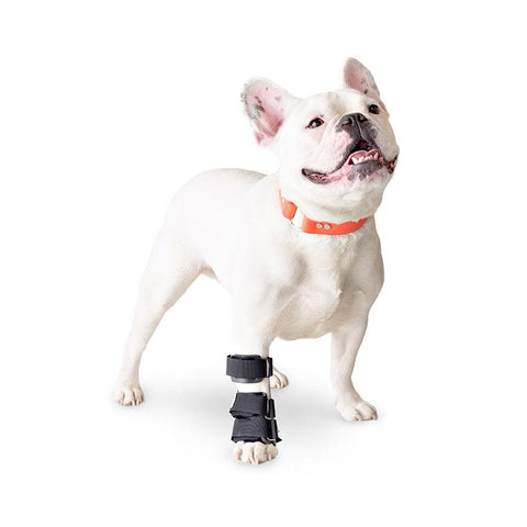Ferula Carpiana Para Perro Walkin' Carpal Splint de Handicapped Pets