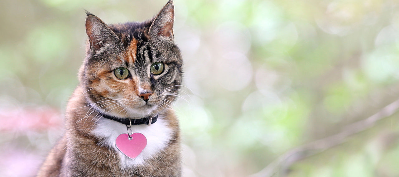 7 Tips For Choosing the Perfect Cat Collar