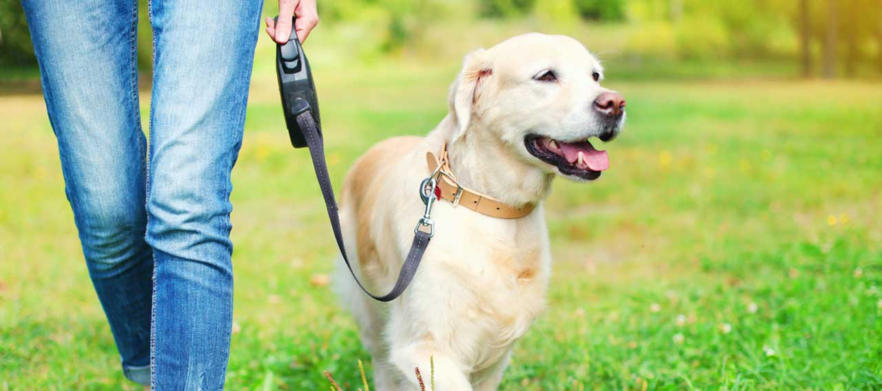 5 Essential Items You Need When Walking Your Dog