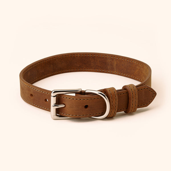 1-inch crazy horse leather collar for retrievers