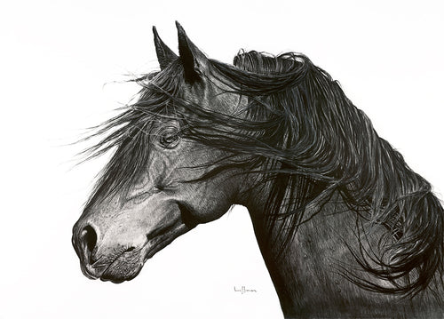 Original charcoal artwork by Lew Brennan of a horse in side profile with white background