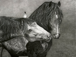 Realist charcoal drawing by lew brennan of two horses touching noses