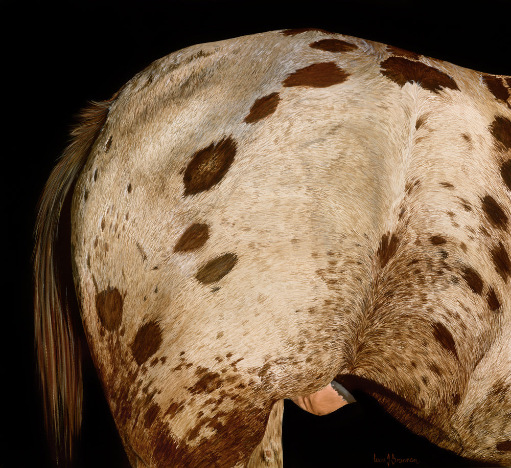 Original realist oil painting artwork by Lew Brennan of an Appaloosa's rump with black background