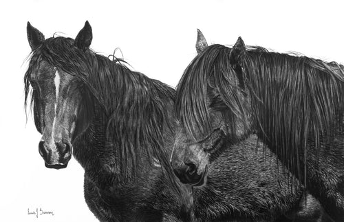 Original charcoal artwork by Lew Brennan of two horses side by side with white background