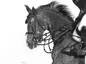 Realist charcoal drawing by lew brennan of a dressage polo horse being ridden
