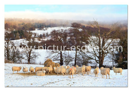 Luxury Yorkshire Christmas Cards