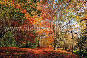 Autumn Leaves canvas