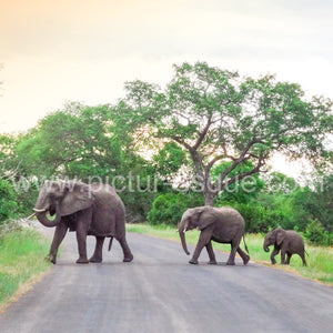 An elephant family crossing the road in the beautiful country of South Africa